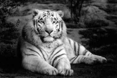 Los principios del tigre 3, Francisco Acuyo