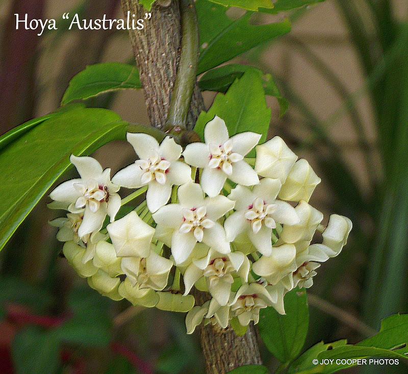 LOVELY FLOWERS DSCF6287%2520picadilo