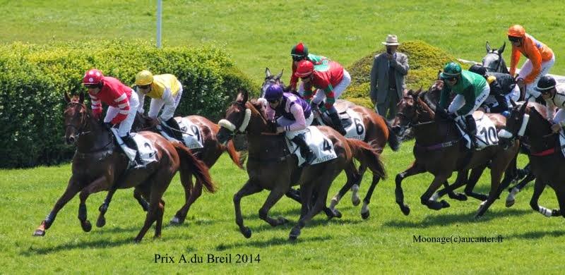 Photos Auteuil 8-06-2014  IMG_1637