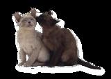 imagem dos gatos