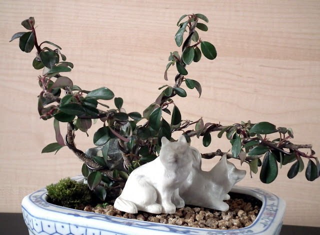 Forest Hideout - group of 5 Cotoneasters and Akita dogs statue in white porcelain pot