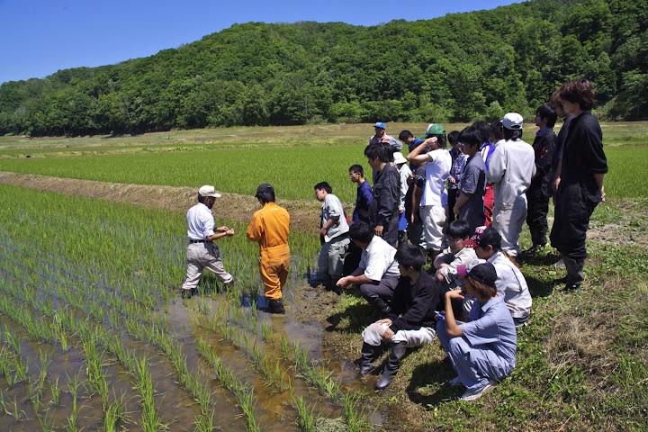 拓殖大学北海道短期大学・環境農学科(八谷和彦 教授)の大学生が水稲の病害虫調査@(有)田からもの有機栽培圃場
