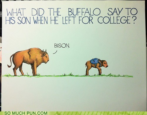 a cartoon of a buffalo: what does a buffalo say to his son who is going off to college bison