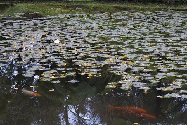 No todo el agua es ferrosa, alguna es limpia con peces y plantas