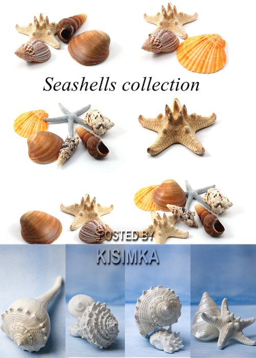 Stock Photo: Seashells collection