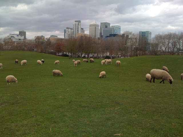 Mudchute+Farm+and+Park+Canary+Wharf+sheep