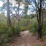 Track through the heath (79570)