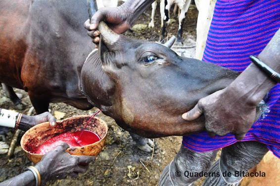 sangre de vaca