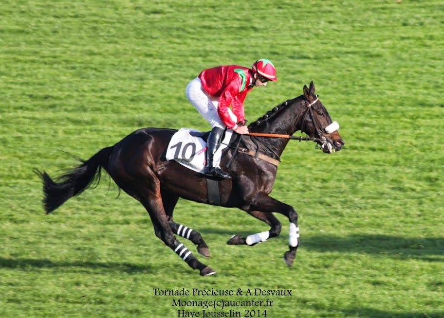 Photos Auteuil 2-11-2014 (48h de l'obstacle) IMG_5617