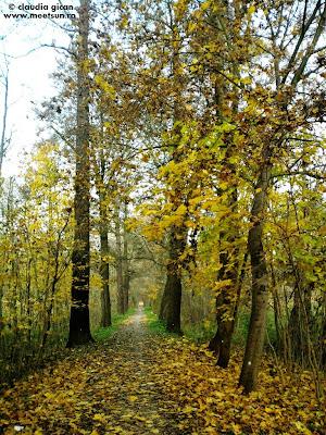 Aleea Kilometrovka, Pilse, Cehia