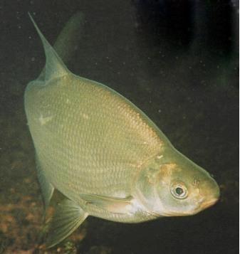 ловить рыбу ночью с фонарем