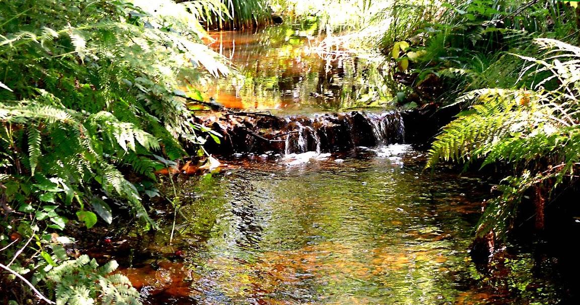 28 августа 2011. Красные воды Золингена. Фото Алексея Потупина