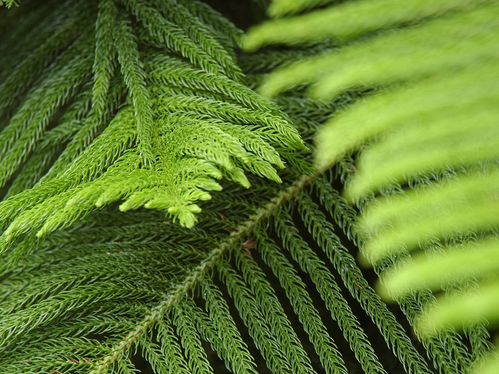 Amazing things with plants conifers for The evergreen