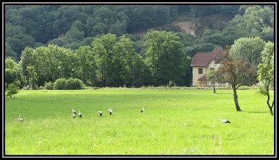 Virée en Alsacie et Vosgie IMG_2499