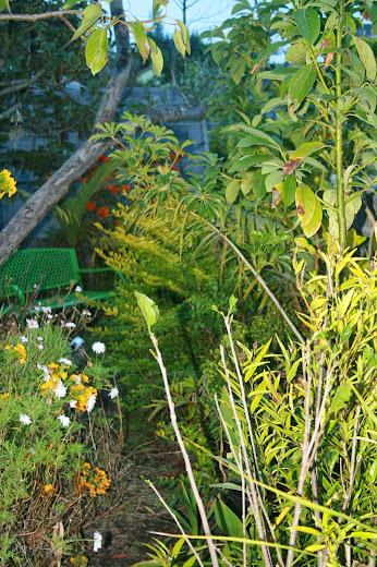 Futur jardin d'orchidées!!! - Page 2 IMG_4059