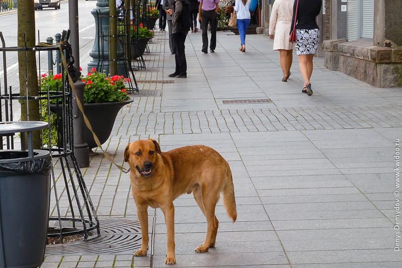Собака ждет своего хозяина на улице, пока тот скупляется...
