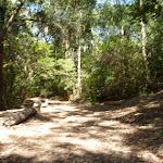Trail near houses in Blackbutt Reserve (401026)