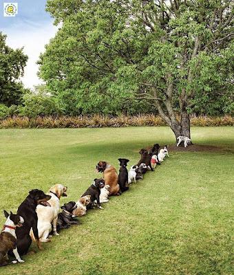 Consequências do derrube exagerado de árvores
