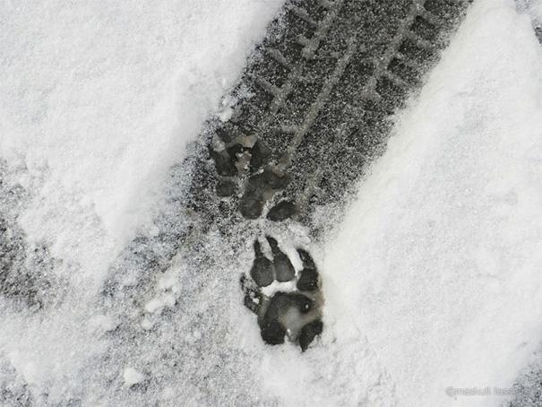 Животинските лапи на Маскул Лесер