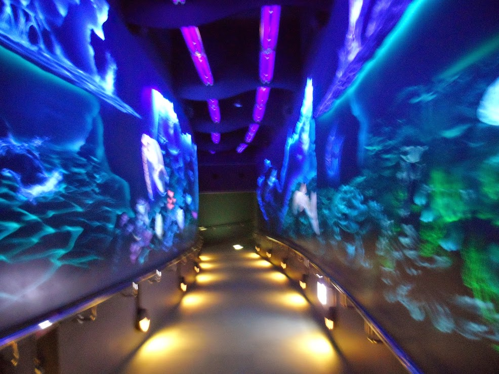 Lighted aquariums on both sides of the path