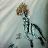 Lizz shara avatar image