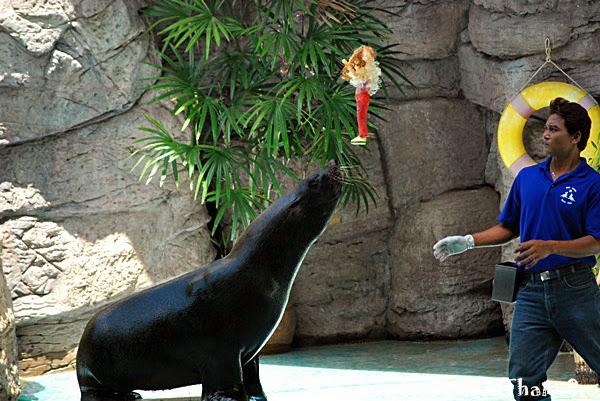 สวนสัตว์นครราชสีมา, สวนสัตว์โคราช, Korat Zoo