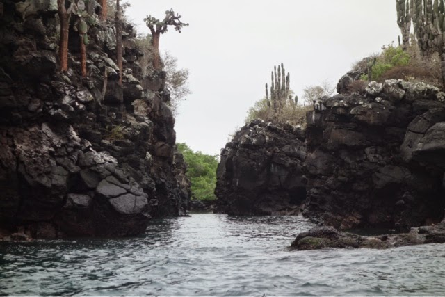 bay tour in santa cruz the galapagos islands