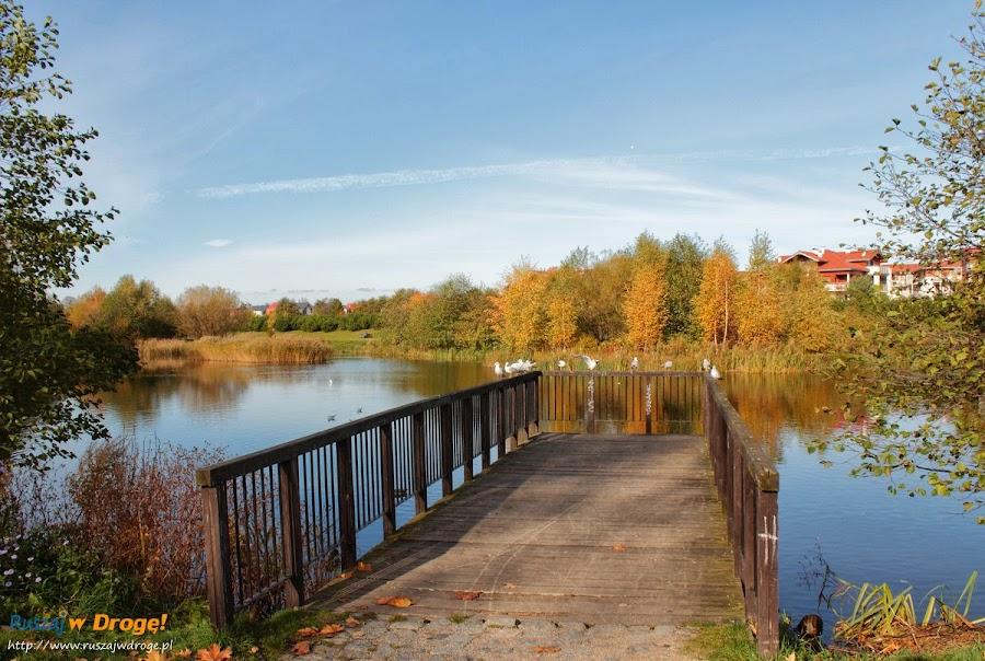 Park Reagana w Gdańsku - nad stawami
