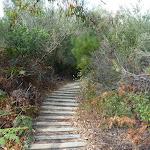 Timber steps on Henry Head Track near Botany Bay National Park (311084)