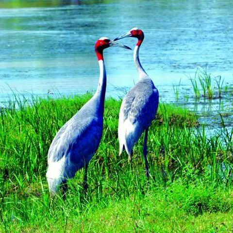 Nalsarovar bird sanctury Aatif