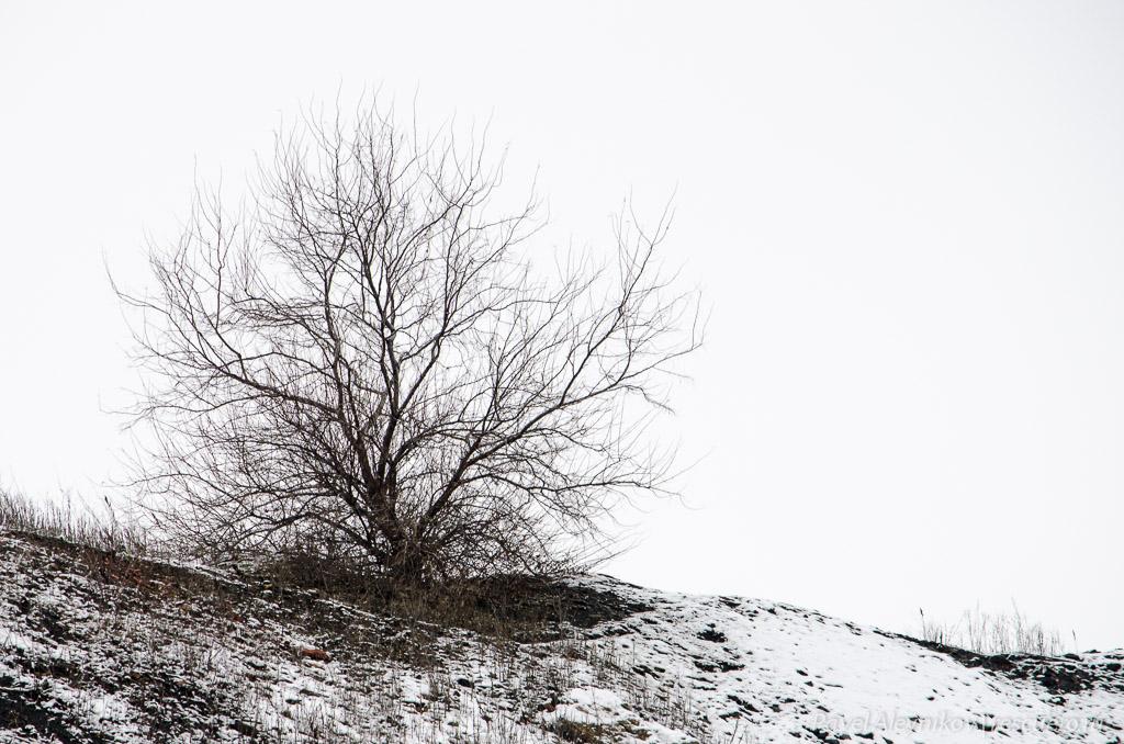 Дерево на терриконе