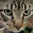 Mamun Jamil avatar image