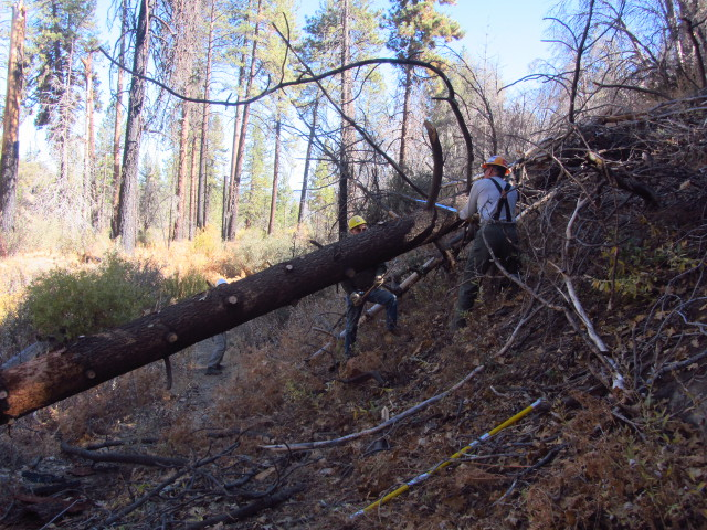 tree trunk stretched across the trail with many limbs removed and a few more vanishing