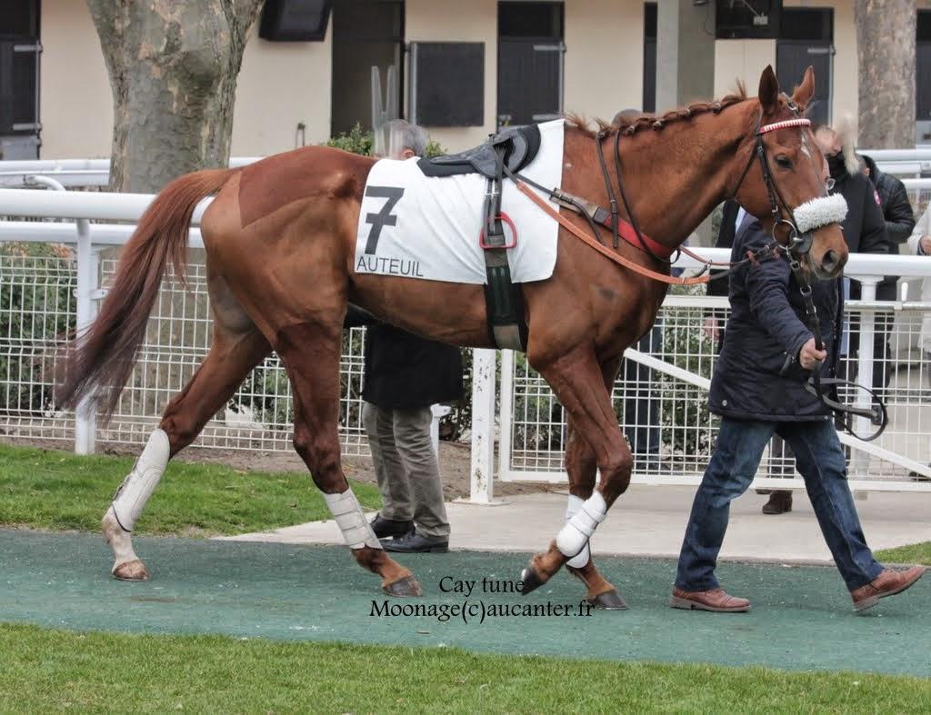 Photos Auteuil 14-03-2015 IMG_7280