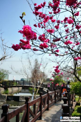 芬園花卉生產休憩園區 - 陣陣的花香