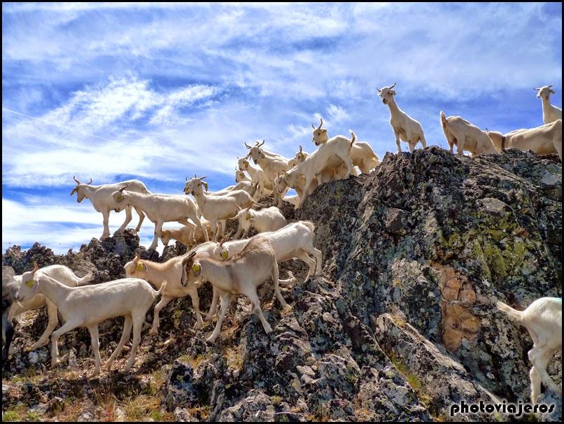 Peña de la Cabra
