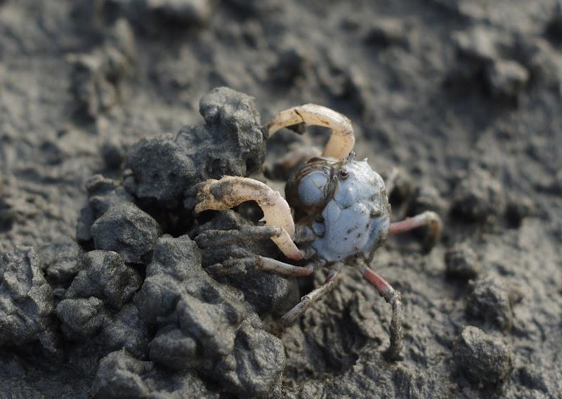 高美濕地 黑白丰采 x 3 + 螃蟹
