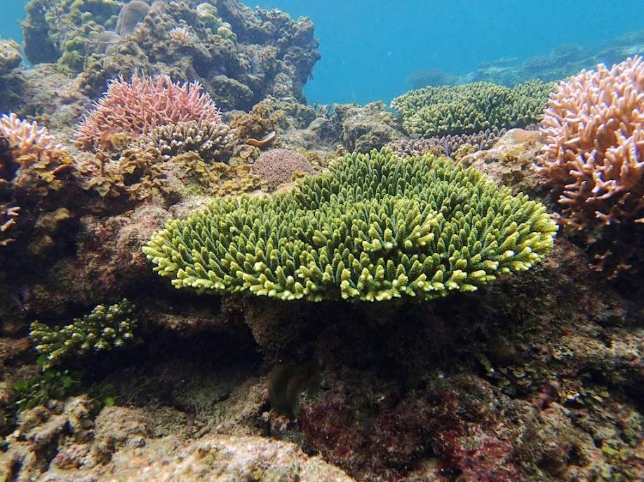 Coral reef, El Nido, Palawan, Philippines