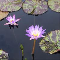 Karen Vitale's avatar
