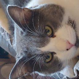 Okie Cavies's profile photo