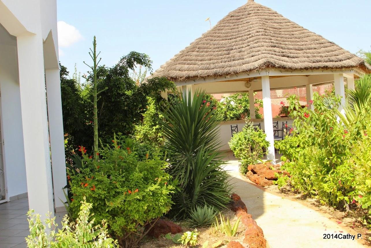 Mon jardin senegalais IMG_1669