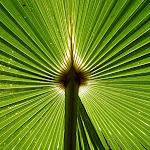 Sun through leaf (30158)