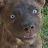 Charlie Loco avatar image