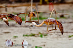 Hand made coconut birds