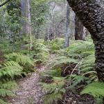 Through the ferns (24534)