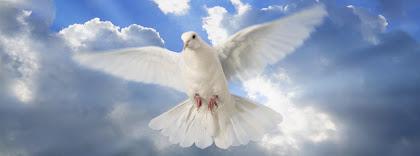 Portada para facebook de Paloma blanca paz, espíritu santo