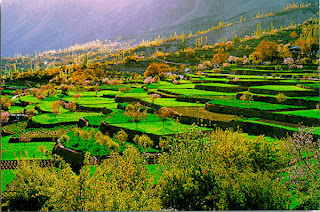 Green terraces in the summers of Pakistan