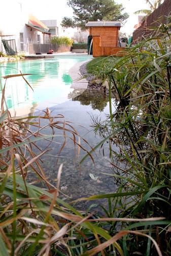 Piscina natural comestible en valencia urbanarbolismo for Jardines verticales valencia