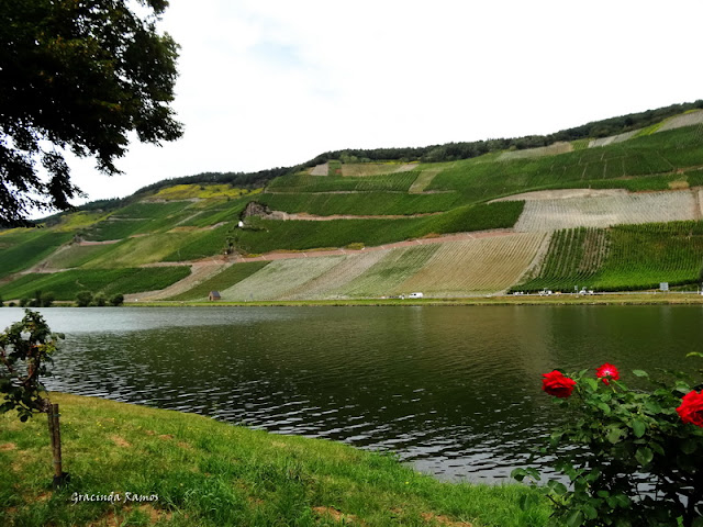 passeando - Passeando pela Suíça - 2012 - Página 21 DSC08371