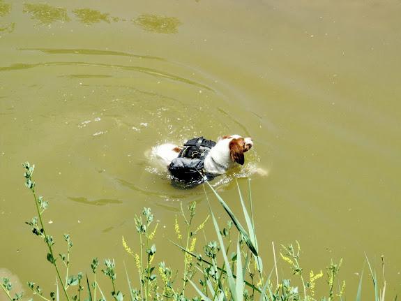 Torrey swimming